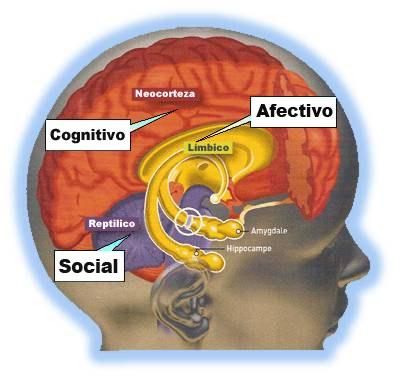 cerveau-trine-signos2