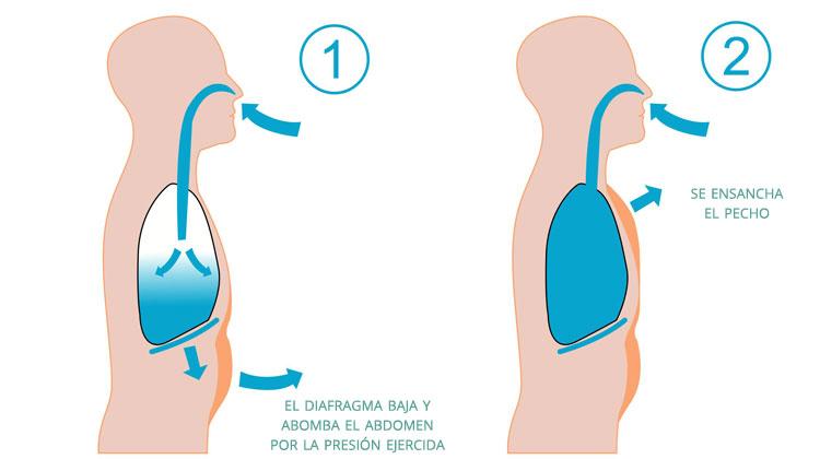 respiracion-abdominal